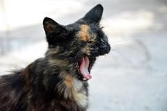 Street cat (elka.) Tags: chat cat katte kotka gata neko animal nature γάτα кошка кошки котка feline