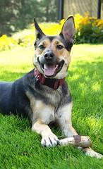 Sucha hansom dog (ramseybrown) Tags: sucha hansom dog