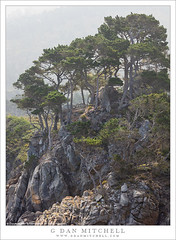 Fog, Trees, Knoll (G Dan Mitchell) Tags: fog trees knoll monterey cypress peninsula pointlobos state reserve park rocky morning light rugged nature landscape pacific coast ocean california usa north america