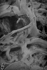 16 (andrea.fogliacco) Tags: giallo film pellicola ilford fp4 plus sviluppo rullini vintage black white develop developed reflex old school vecchia scuola