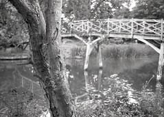 reflecting at the Trout (OhDark30) Tags: olympus 35rc 35 rc film 35mm monochrome bw blackandwhite bwfp fomapan 200 rodinal river thames path bridge reflection tree trout inn godstow wolvercote
