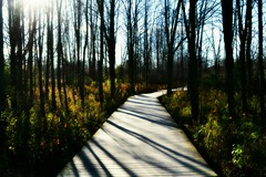 Boardwalk in Nature (marymorano) Tags: trees woods forrest hike hiking boardwalk outdoors outdoorphotography shadows autumn nature wisconsin parks