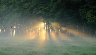 Brennende Bäume - Lichtspiele morgens beim Rinderzählenk; Bergenhusen, Stapelholm  (13)