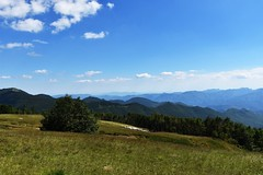 Pecore 🐑 (lauratintori) Tags: shepherd ewe sheep bluesky sky mountains mountain trees tree panoramic panorama pointofview view landscape color nikond7200 d7200 nikon detail details photography picture pic phoro ph lauratintoriph