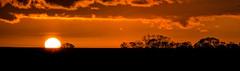 Sun Going Down (Anthony Kernich Photo) Tags: adelaide australia southaustralia sunset panorama panoramic pano freeling sundown dark night nightime landscape olympus photo photography sun orange yellow sunshine twilight dusk evening nice olympusem10 olympusomd scene image silhouette microfourthirds vibrant colour