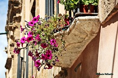 Imperfect garden... (Mario Pellerito) Tags: canon eos 60d 18135 erice trapani italia italie italy art fiori garden imperfect mariopellerito mario pellerito sicilia sicilie sicily old paths sizilien pov