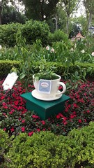 twinings teacup display at epcot (wmpe2000) Tags: 2017 cell whatsapp bmsphotos tea teatime epcot floralshow florida