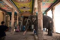 (Premnath Thirumalaisamy) Tags: temple chola visitingcholas travel travelogue premnaththirumalaisamy airavateswarartemple unheritagesite tamilnadu