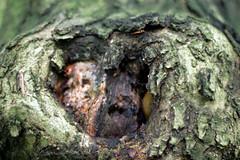 Arachnophobie (Sylithio) Tags: arachnophobie spinnenangst waldgeister forest tree baum