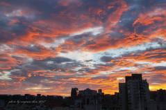 _DSC9527a (virginia1988) Tags: 台灣 台北市 黃昏 夕陽 雲彩 nikond300 sigma1770mm virginiachou如 virginiachou taiwan