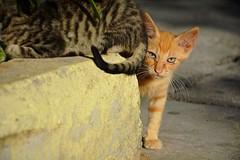 Street kitty (elka.) Tags: cat cats kitty nature animal gata gatta neko katze chat kitten γάτα кошка кошки котка feline