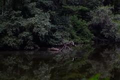 20170722-IMG_9846 (franciscoruela) Tags: centralpark nature nyc vsco wildlife