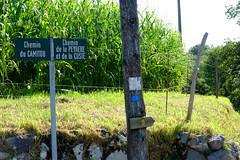 Beaucoup de VTT sur ce parcours aussi (alainlecroquant) Tags: coteauxdesaintpédebigorre saintpédebigorre coteaux abbatiale palombière randonnée hautespyrénées vaches lavoir ferme cheval vtt fleurs