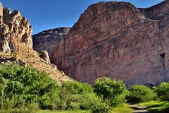 Vibrant Greens of Trees Along the Shores of the Rio Grande and Boquillas Canyon (Big Bend National Park)
