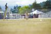 _MG_9943 (Corey Polis) Tags: akc coursing dogsports fastcat july302017 mushu nwrrc sequim