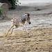 auspowern (Mel.Rick) Tags: tier natur pflanzenfresser pferde zebras damarasteppenzebra equusquaggaantiquorum zooduisburg