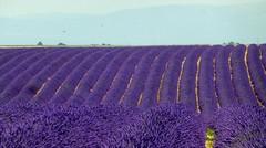 plein les yeux (b.four) Tags: lavande lavender lavanda valensole alpesdehauteprovence ruby5 coth5 ruby10 ruby15