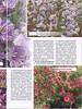 Цветы в саду и дома 10 2015