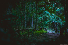 (Cat Food Williams) Tags: mtb fernie british columbia canada forest erie bikes corner woods dirt trees light
