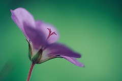 attitude (christian mu) Tags: flowers bokeh nature spring germany münster muenster botanicalgarden botanischergarten christianmu 9028g 90mm 9028 schlossgarten sonya7ii sony
