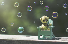 button does not like bubbles (rockinmonique) Tags: button tiny bear teddybear whimsical bubbles bokeh light green fun silly sechelt sunshinecoast juneflickrgalsmeetup moniquew canon canont6s tamron copyright2017moniquew