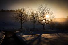 Breiten Winter 3 Bäume Sunset (Bugtris) Tags: breiten 2470f4l burgistein trees baum landschaft nebel sonne winter schnee tree fog canon 5dmkiii sunset snow