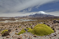 Parinacota volcano (Joost10000) Tags: landscape mountain vulcano landschaft parinacota highlands altiplano chile bolivia lake lago vulcan arica outdoors scenic nature natur wild wilderness andes southamerica canon canon5d eos green water