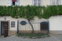 The Oldest Vine, Maribor, Slovenia (Ruth&Michiel) Tags: wijnrank vine wijn wine oldest oud oude old oudste maribor slovenië slovenia record guinnessbookofworldrecords