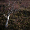 Sparks (jellyfire) Tags: bendamph distagont3518 elgol february highlands landscape landscapephotography scotland sony sonya7r torridon winter ze zeissdistagont18mmf35ze birch heather leeacaster wwwleeacastercom zeiss