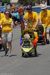 DSC01212 (Cyn Reynolds) Tags: pug rescue pugbutt sandiego glbt pride parade 2017