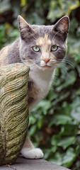 I see you... (Steenvoorde Leen - 4 ml views) Tags: doorn 2017 utrechtseheuvelrug pussy puss cat kat poes jong young katze chat minou mieze pussycat gata gato gatta loesje look