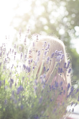 mystery of  lavender ❤️ (D.Sinkute) Tags: lavender flowers girl jenta nature plants flora photosession norge norway norvegija 50mm canon dream dreamy sunshine evening solstråle kveld happy mystery blue purple fade faded mist sun bokeh eyes look hordaland lindås myking hiding green gamta summer