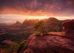 Sedona-5652-Edit (Michael-Wilson) Tags: sedona michaelwilson arizona sunset red clouds merrygoround southwest explore tree cliff rock mountains sedonaarizona photography fineart