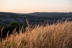DAN_8948 (dan_c_west) Tags: nikon d750 sheffield bole hill grass nature orange hillside