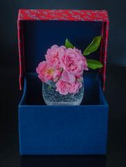 Rose box (frankmh) Tags: flower rose glass box hittarp sweden indoor