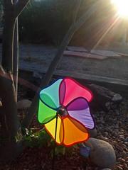 My neighborhood in Albuquerque with iPhone.  New Mexico, USA. (cbrozek21) Tags: windspinner ornament color rainbow light neighborhood albuquerque pinwheel iphone gardenornament garden