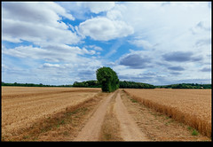 170624-2514-XM1.jpg (hopeless128) Tags: path france sky eurotrip fields tree 2017 clouds nanteuilenvallée nouvelleaquitaine fr