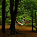John P. Saylor Trail: Suspension bridge (Shahid Durrani) Tags: john p saylor trail somerset county gallitzin state forest pennsylvania