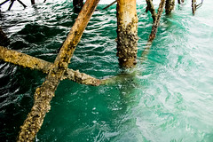 IMG_1165 (ahmed_Maher) Tags: egypt hurghada elgouna egyptian roadtrip sea redsea green blue colors marina wildlife details macro caribbean documentary thisisegypt