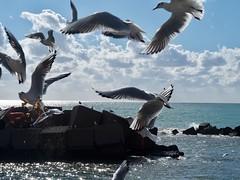 Birds (efpiem72) Tags: olympus istantanea gabbiani campania italia italy seaside shore animals stones salerno sea seagulls