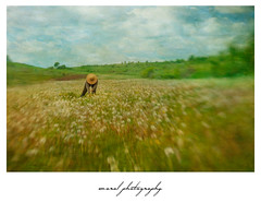 IMG_02f77 (Cristian CN) Tags: dandelion field spring clouds sky green painterly lesnbaby sweet50 hills