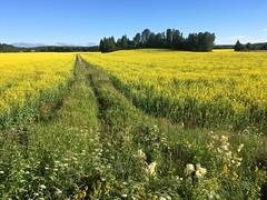 Ruotsinkylä (jiihaa) Tags: iphonesebackcamera415mmf22 finland landscape tuusula ruotsinkylä field