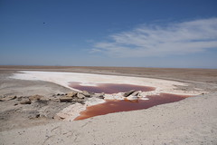 DE5_2033 (takkotakko) Tags: san ignacio lagoon laguna red mineral water bacteria color baja california mexico sur norte summer travel people mexican mexicano