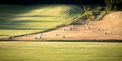 1L0A4282 (kayaker72) Tags: palouse washingtonstate easternwashington palouseregion wheat wheatfields