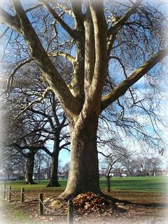 ODC - Trees