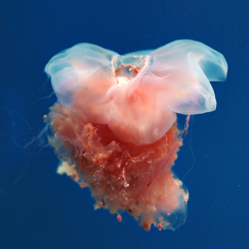 oceanarium sull'isola Russky - medusa