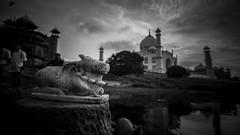 Kadavulum_kallaraiyum (Sudharsan Ravikumar) Tags: tajmahal monument delhi india photography monochrome blackwhite blackandwhite bnw instablackandwhite monoart instabw bnwsociety bwlover bwphotooftheday photooftheday bw instagood bwsociety bwcrew bwwednesday instapickbw bwstylesgf iroxbw igersbnw bwstyleoftheday monotone monochromatic noir fineartphotobw canon 5d sigma 35mm art telelens sr sudharsanravikumar