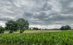 Summer clouds (Jorden Esser) Tags: puth church cornfield darkclouds field landscape trees nederlandvandaag summer green