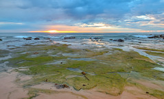 A touch of green - Sunrise Seascape (Merrillie) Tags: daybreak moss sand landscape nature water newsouthwales rocks nsw beach scenery green clouds newport earlymornings waterscape sea australia dawn seascape