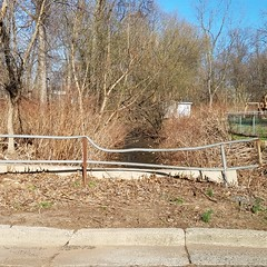 43.2017-04-09 16.56.24 (susantedmunds) Tags: bridge lexingtonave invasiveplants floodplain park